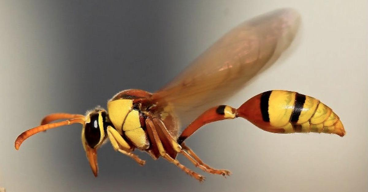 11 Insane Insect Facts You Never Knew
