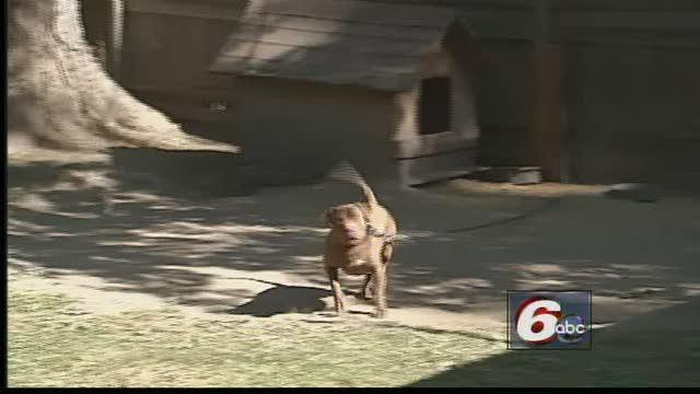 Pit Bull Operation Angers Neighbors, City Animal Control
