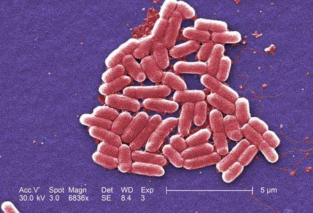 New incentives needed to develop antibiotics to fight superbugs