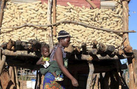 Zimbabweans go hungry as drought hammers southern Africa