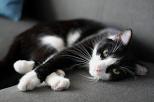 Ways to keep your indoor cat happy
