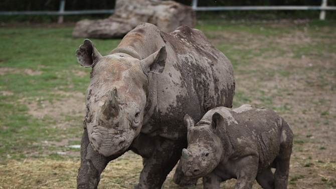 The New Arrivals At Port Lympne Wild Animal Park