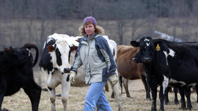 FILE - In this Feb. 2, 2012 file photo, organic dairy farmer Siobhan Griffin stands in a field with her cows a field at Raindance Farm in Westville, N.Y. While other states are reaping the wealth of the Marcellus Shale, New York has had a moratorium on drilling for four years while it overhauls regulations amid intense lobbying for a ban. Griffin, who raises grass-fed cows and sells organic cheese, doesn't see gas as the answer. Rather, she fears for her cows if drilling comes to neighboring leased land. She points to Pennsylvania, where 28 cows were quarantined from sale after they drank wastewater, and Louisiana, where 17 cows died after drinking contaminated water. (AP Photo/Mike Groll, File)