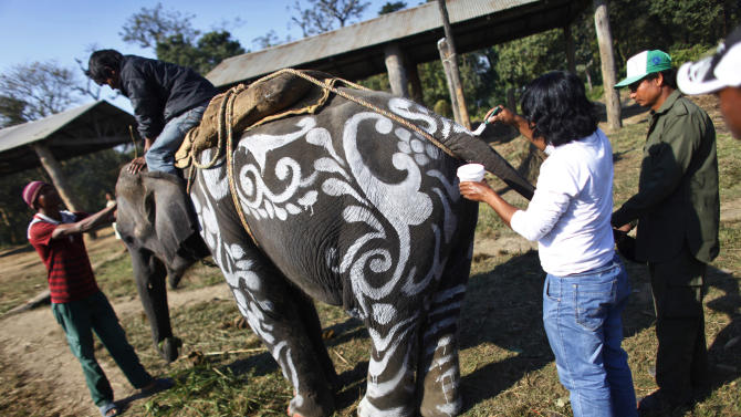 A mahout decorates his elephant before participating in an elephant competition in Sauraha, Chitwan, 170 kilometers (106 miles) south of Katmandu, Nepal, Wednesday, Dec. 28, 2011. An elephant festival mainly held for tourism began here Monday. (AP Photo/Niranjan Shrestha)