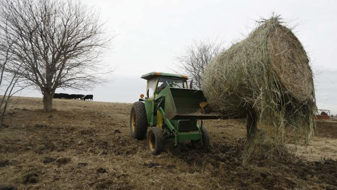 In this Tuesday, Feb. 12, 2013 photograph, Randy Cree picks up a bale of hay while feeding cattle on his farm near Big Springs, Kan. Years of drought are reshaping the U.S. beef industry with feedlots and a major meatpacking plant closing because there are too few cattle left in the United States to support them. (AP Photo/Orlin Wagner)