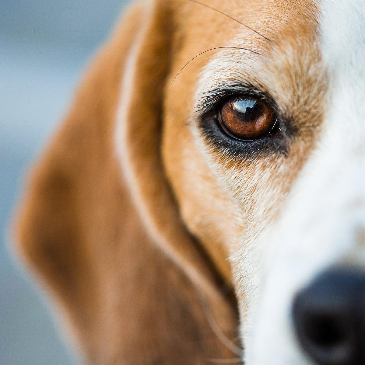 5 Dogs Died After Eating Their Owners' Skin Cancer Cream, FDA Warns