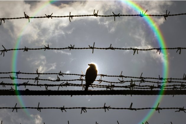 A bird is perched on barbed wire that surrounds the Jilava prison near Bucharest