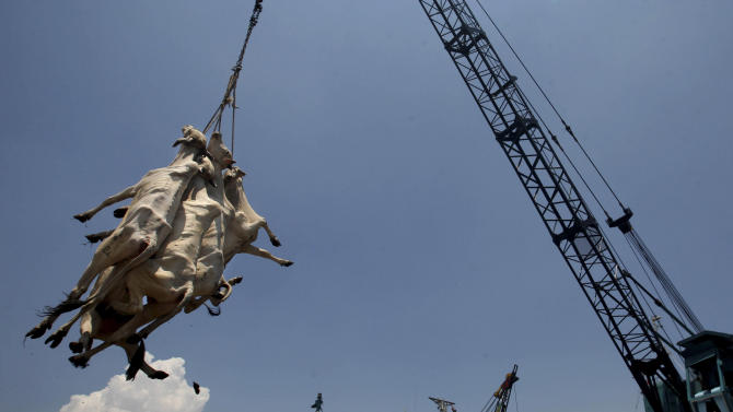 In this Saturday, Feb. 9, 2013 photo, cows from West Timor are lifted by a crane to be loaded onto waiting trucks and distributed across the main island of Java, upon arrival at Kali Mas port in Surabaya, East Java, Indonesia. The price of beef, the main ingredient in bakso, has hit a record high while other essential ingredients — garlic, shallots and chillies — have also recently skyrocketed. (AP Photo/Trisnadi)