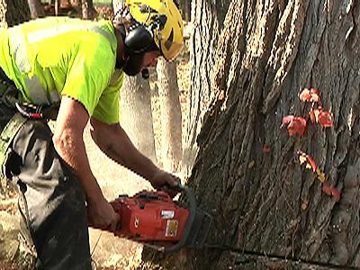Raw: N.H. crews trim trees ahead of big storm