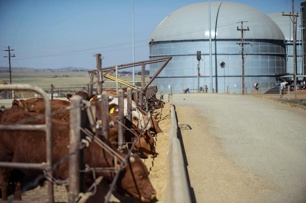 From dung to BMWs at green energy plant in South Africa
