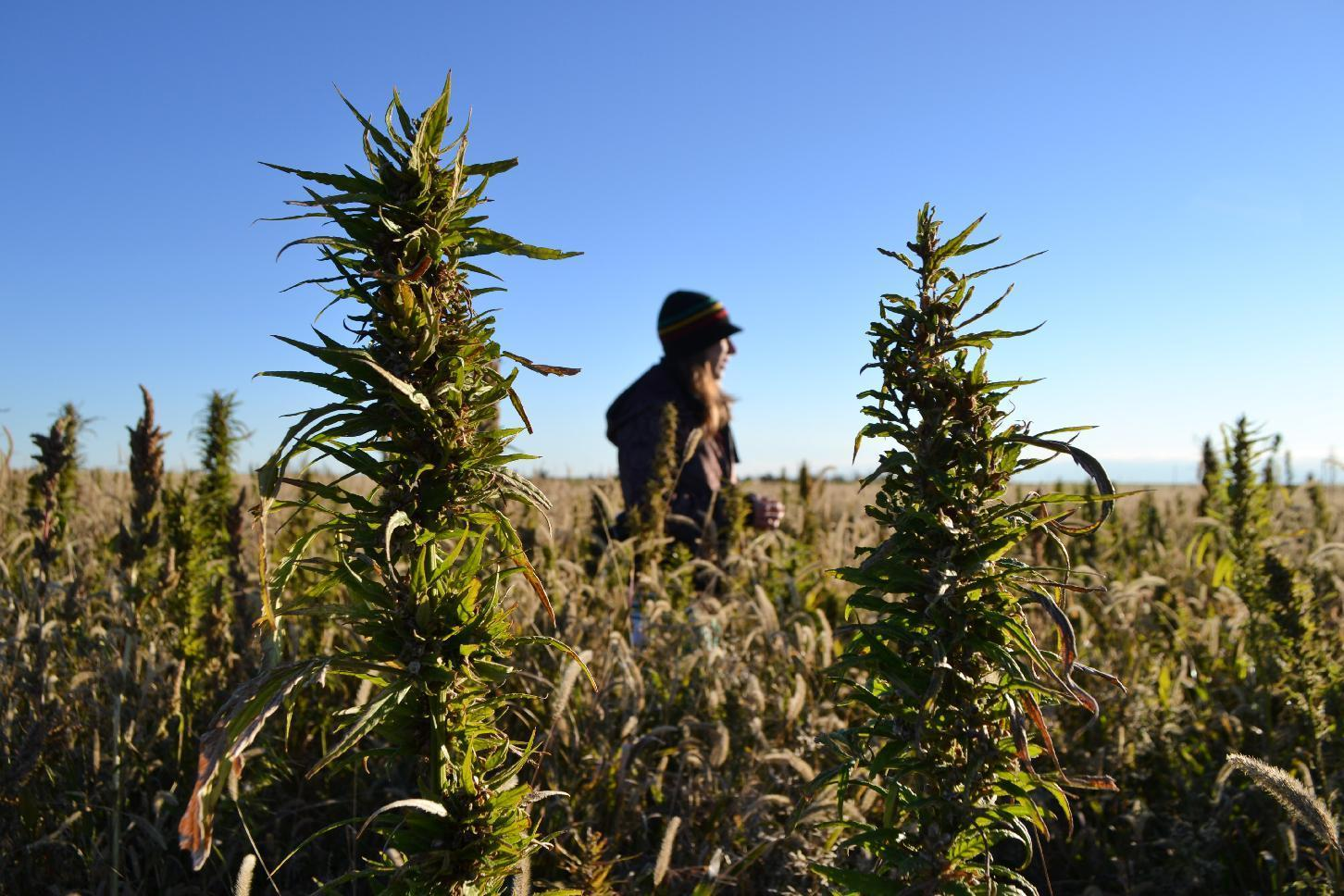 Oregon hemp farmer says startup going slow