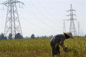 A farmer works in a paddy field under the power lines …