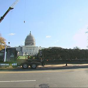 Capitol Christmas Tree Arrives in DC
