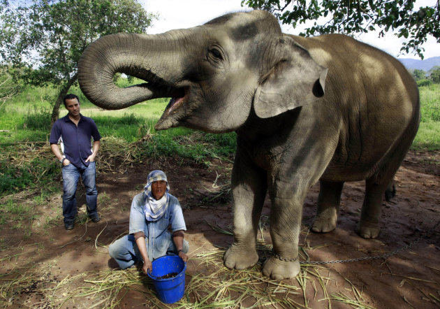 In this photo taken Dec. 3, 2012, Blake Dinkin, left, watches as a Thai mahout feeds Meena, a 12-year old elephant with coffee beans mixed with fruits at an elephant camp in Chiang Rai province, north