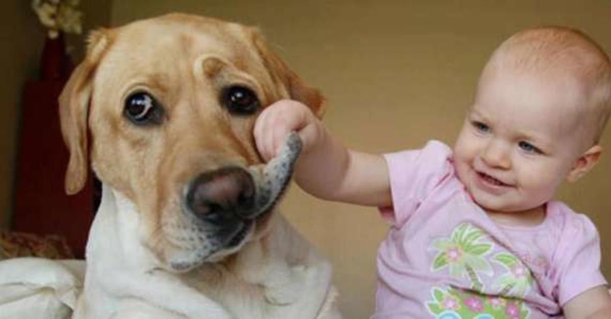 13 Words That Make Your Dog Give a Strange Look