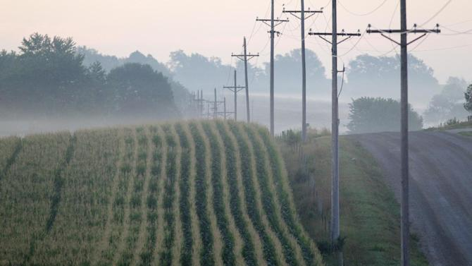 This file photo from July 19, 2012, shows a corn field on a foggy morning near Springfield, Neb.  The USDA is releasing its first estimate of the 2013 crop size in its spring planting report on Thursday, March 28, 2013. (AP Photo/Nati Harnik)