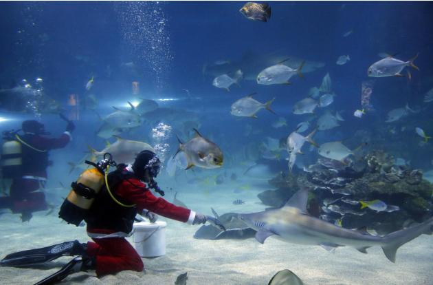 A diver dressed as Santa Claus feeds the sharks in Budapest's Tropicarium