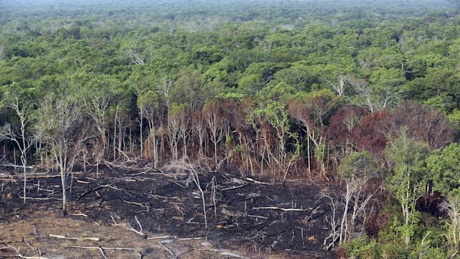 An area of the Xingu National Park in the Amazon rainforest, which has been slashed and burnt, is seen next to a section of virgin forest, in Mato Grosso, Brazil