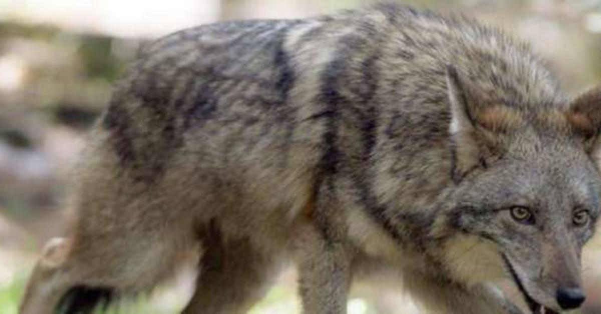 10 Animal Hybrids You Didn't Know Existed