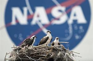 A family of Osprey are seen outside the NASA Kennedy Space Center Vehicle Assembly Building in Cape Canaveral