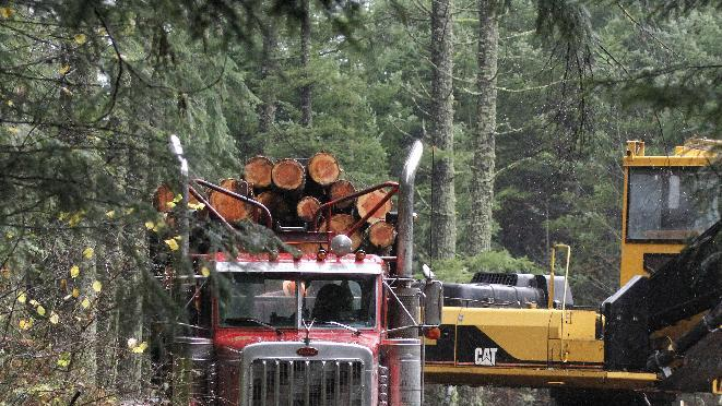Logger Eric Davis runs down the road as a truck loaded with logs is readied in the forest near Banks, Ore., Friday, Nov. 30, 2012.  The U.S. Supreme Court will hear a case Monday, Dec. 3, regarding regulation of water runoff from logging roads.(AP Photo/Don Ryan)