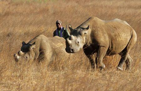 U.S. gives approval for $350,000 rhino hunt sold at Texas auction