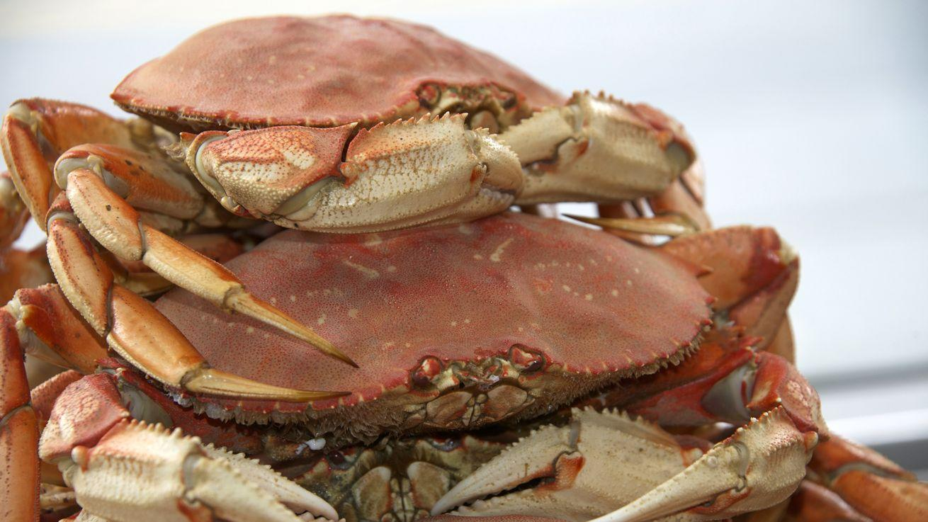 Dungeness Crab Is Back on the Scene, Prepare for Crab Feed(ing) Frenzy