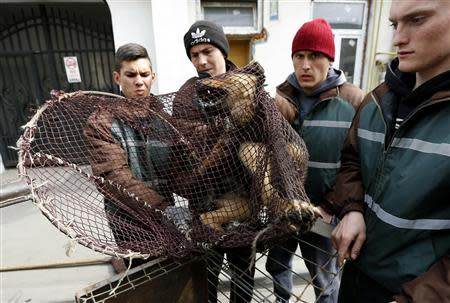 A stray dog is taken from the street by dog catchers in Bucharest