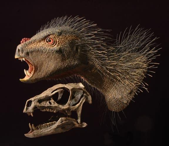 'Dracula' Dinosaur Had Bristles and Fangs
