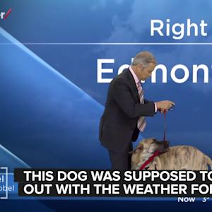 Unruly Dog Ruins Weather Report, Steals Our Hearts