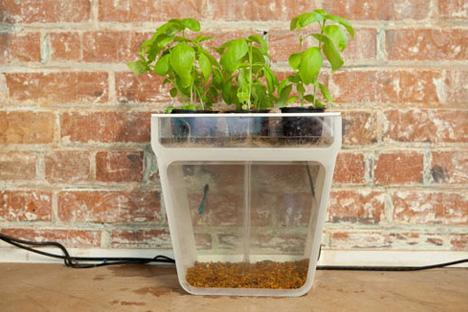 Self-Cleaning Fish Tank + Garden Turns Waste to F … Self-Cleaning