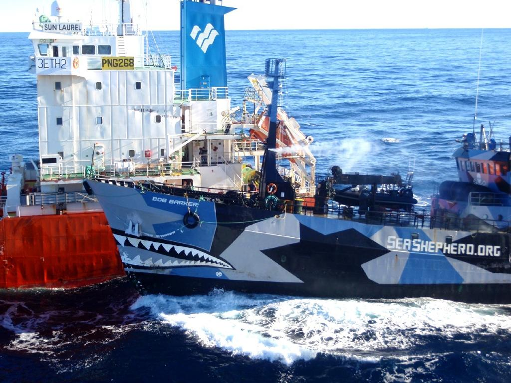 Sea Shepherd warns Japan against resuming whaling