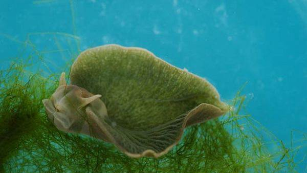 Going Green: The Most Plantlike Animals