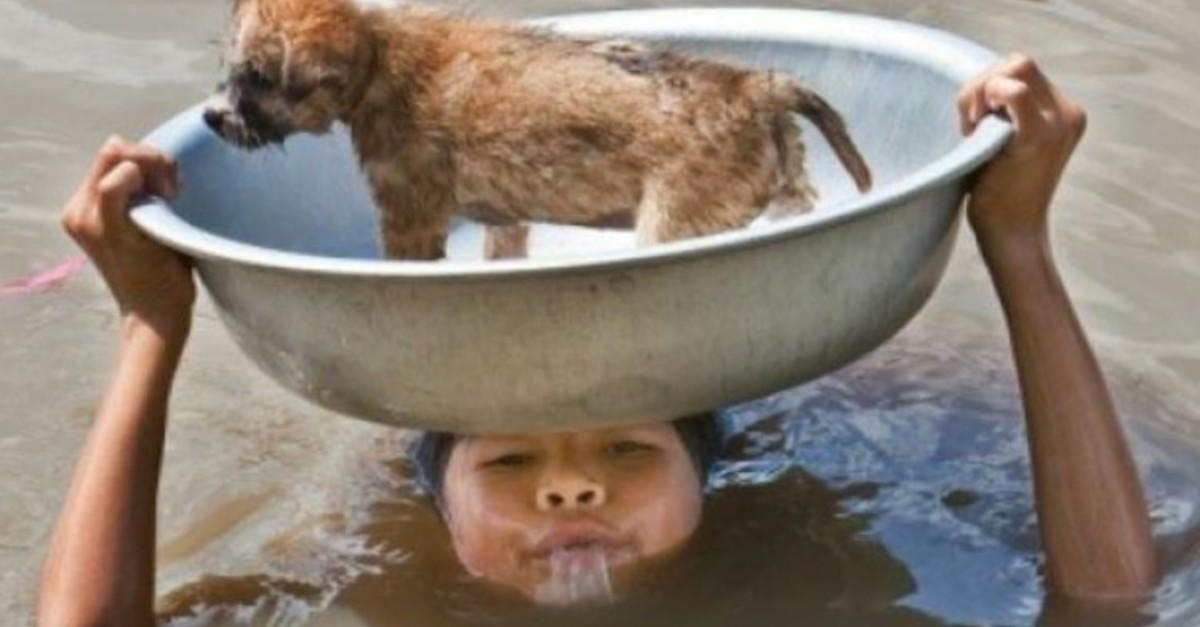 27 Animals That People Did Amazing Things For