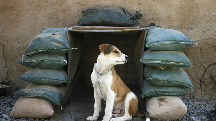 Shadow, an Afghan puppy owned by Canadian soldiers sits in his sand-bagged kennel in southern Afghanistan