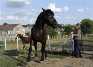 President of the Changing Leads Equine Rescue farm Tina Weidmaier leads
