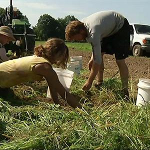 Farm Resurgence Grows With Younger Crowd