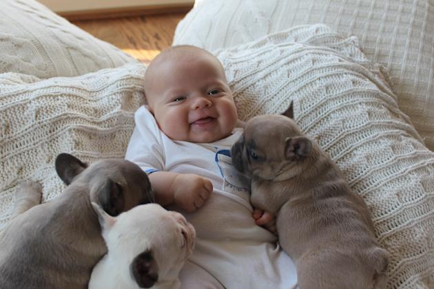 Bulldogs and babies