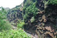 Petaloid travertine formation in the Malinghe Gorge, habitat of anther new species from the nettle family, Pilea guizhouensis.
