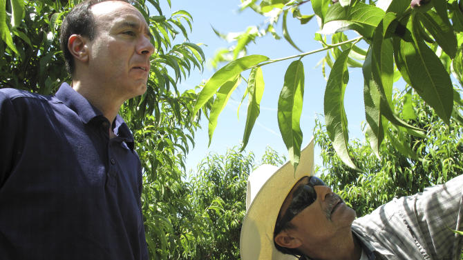 In this April 29, 2014 photo, Dan Gerawan, owner of at Gerawan Farming, Inc., left, talks with crew boss Jose Cabello in a nectarine orchard near Sanger, Calif. Gerawan is in a battle with the United Farm Workers, which wants to represent thousands of workers at the family farm. The workers last year voted on retaining the union or rejecting it, but the ballots have yet to be counted in a contested election that is now playing out in court. (AP Photo/Scott Smith)
