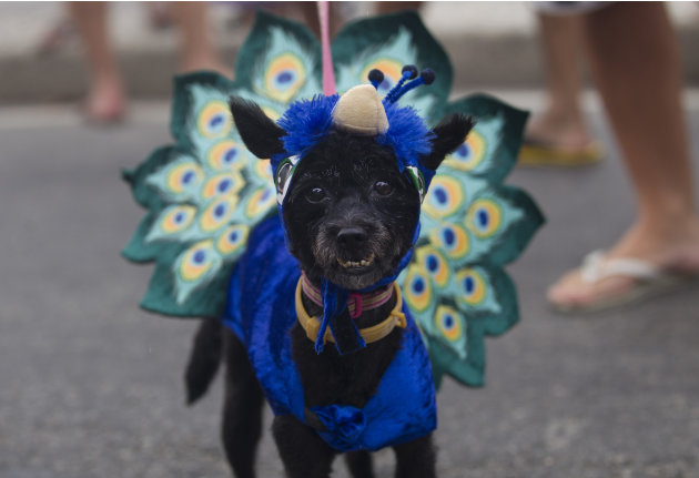 A disguised dog is seen during the &quot;Blocao&quot; dog carnival parade in Rio de Janeiro, Brazil, Sunday, Feb. 3, 2013. According to Rio's tourism office, Rio's street Carnival this year will consist of 492 