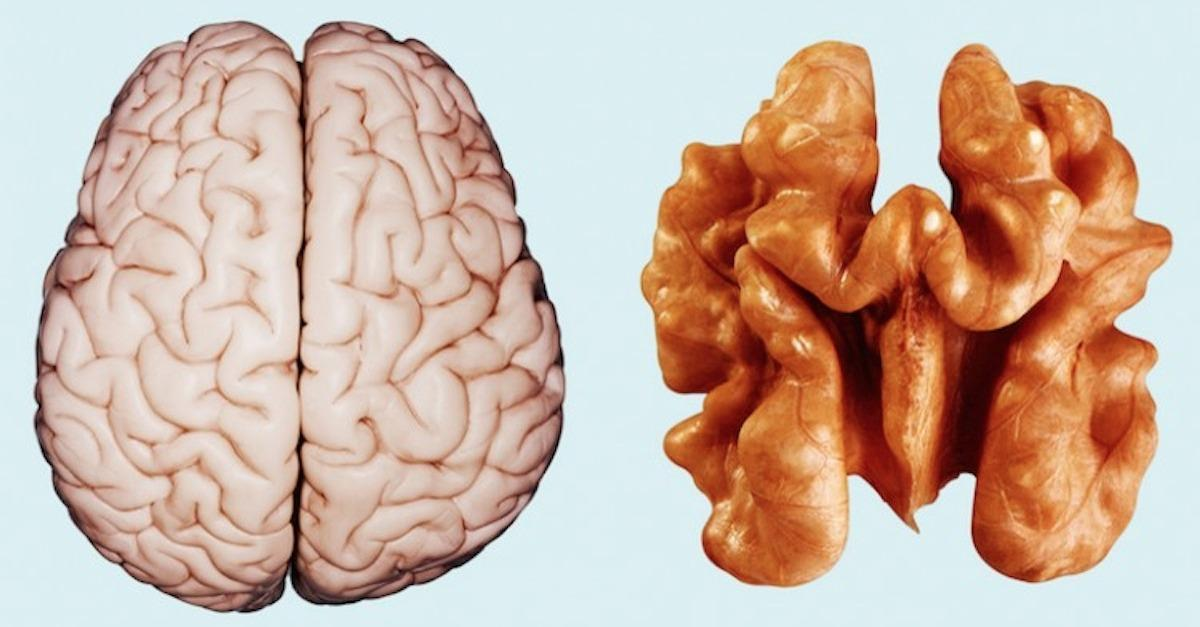 13 Foods That Look Like The Body Part They Benefit