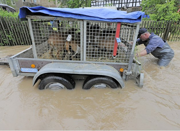 Residents rescue their goats in the flooded area by river Sprotte in Saara, central Germany, Sunday, June 2, 2013. The village is enclosed by the floods. Heavy rainfalls cause flooding along rivers an