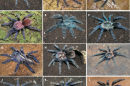 Blue tarantulas may help humans make better wide-angle computer displays