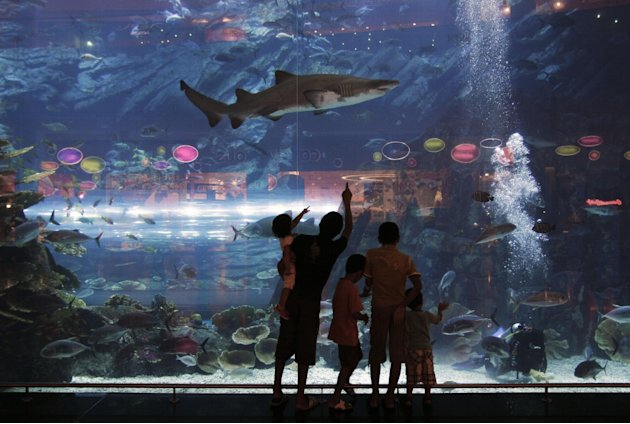 In this Sunday, July 8, 2012 photo, people watch a shark in an aquarium at a shopping mall in Dubai , United Arab Emirates. The global trade in shark fins totals hundreds of millions of dollars a year