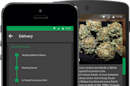 As soon as one 'Uber for weed' startup gets cut down, another grows in its place