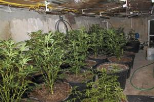"Handout of an indoor marijuana farm, also known as a ""grow house"", in an empty swimming pool"