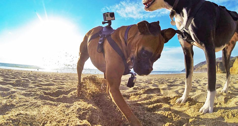 In this undated photo provided by GoPro, a dog wearing two GoPro cameras, one on his back and one on his chest, held on by what is known as a Fetch...