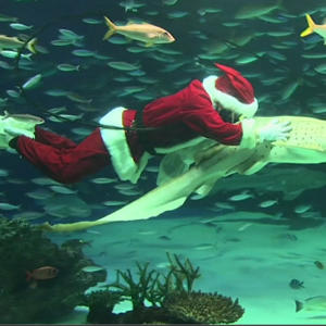 Diving Santa Swims With Sharks