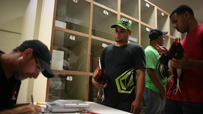 In this Friday, July 6 2012 photo, people wait to register their gamecocks before the start of fight night at Las Palmas, a government-sponsored cockfighting club in Bayamon, Puerto Rico. The island territory's government is battling to keep the blood sport alive, as many matches go underground to avoid fees and admission charges levied by official clubs. Although long in place, those costs have since become overly burdensome for some as the island endures a fourth year of economic crisis.  (AP Photo/Ricardo Arduengo)